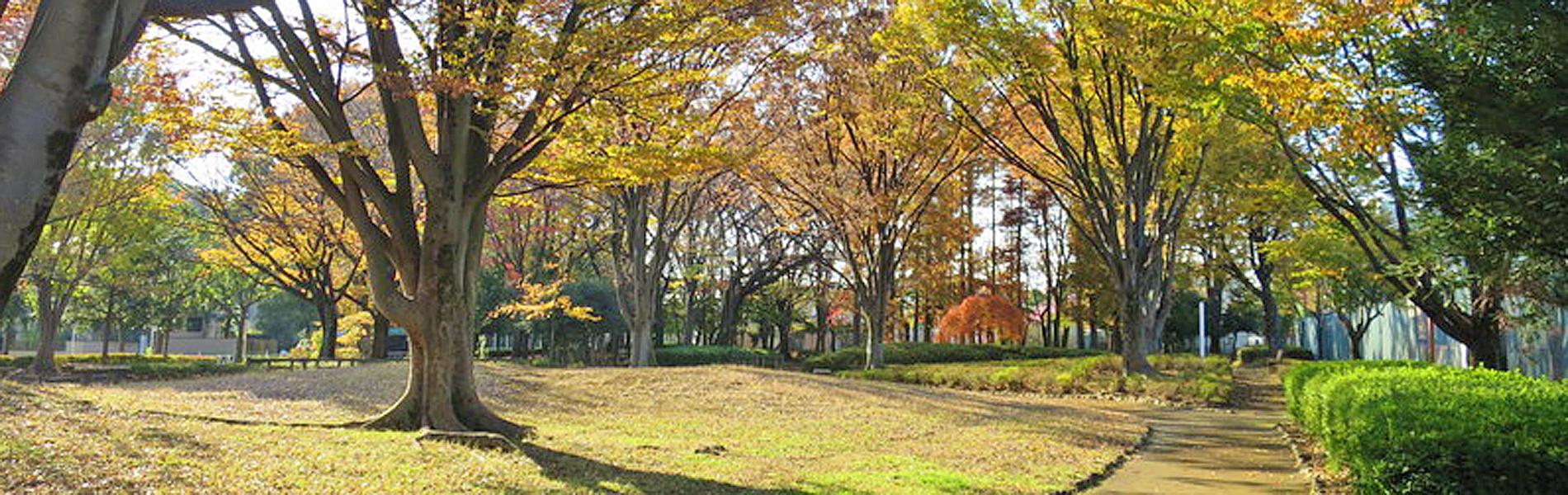 芝生の広場