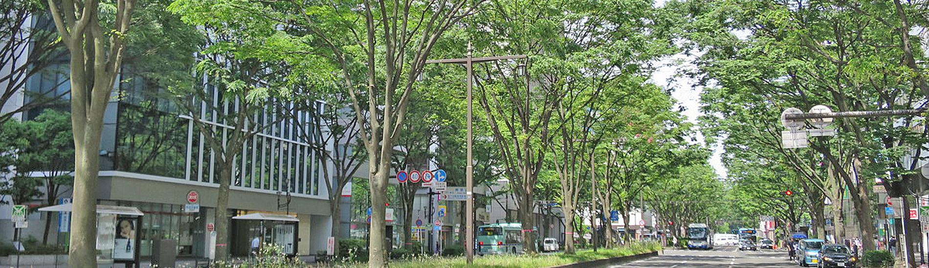 外苑のイチョウ並木