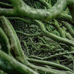 根のクローズアップ